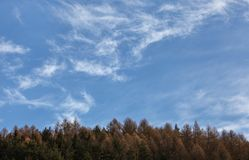 Winter sky space for text with few cirrus clouds over coniferous trees tops.  royalty free stock photos