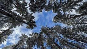Winter sky threw tree tops, Winter 2018 Washington USA stock photo