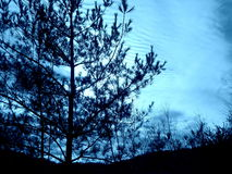Winter Sky 2 tinted. Winter skyline in Connecticut, tinted light blue Royalty Free Stock Image