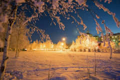 Winter skyline at night with snow-covered trees. Stock Images