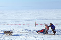 Winter Sled dog racing musher and Siberian husky Royalty Free Stock Images