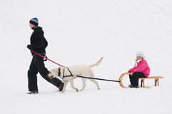 Winter sledding with dog Royalty Free Stock Image