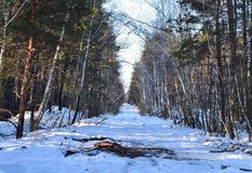 Winter small country road through snowy fields and forests with sunshine on trees stock photo