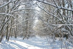 Winter small road Royalty Free Stock Image