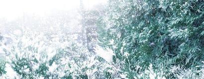 Winter Sneeuw Background Sparren in de sneeuw stock afbeelding