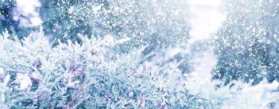Winter Sneeuw Background Sparren in de sneeuw stock fotografie