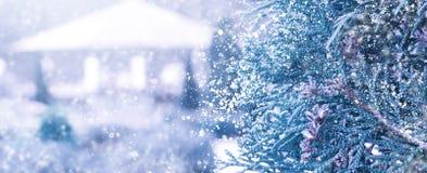 Winter Sneeuw Background Sparren in de sneeuw royalty-vrije stock foto