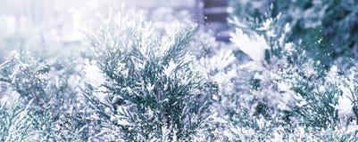 Winter Sneeuw Background Sparren in de sneeuw royalty-vrije stock afbeelding