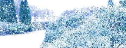 Winter Sneeuw Background Sparren in de sneeuw royalty-vrije stock fotografie