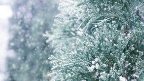 Winter Sneeuw Background Sparren in de sneeuw royalty-vrije stock foto's