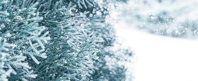 Winter Sneeuw Background Sparren in de sneeuw stock foto's