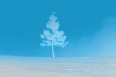 Winter Snow. Pine tree in the winter season snow royalty free stock image