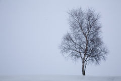 Winter snow Royalty Free Stock Photo