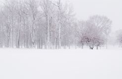 Winter Snow. A snowy winter scene stock photos