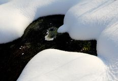 Winter Snow. The Asian Winter covered the ground. Snow gleams white Royalty Free Stock Photos
