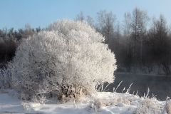 Winter Snow. The Asian Winter covered the ground. Snow gleams white Royalty Free Stock Images
