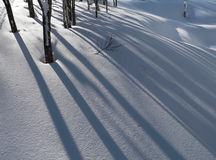 Winter snow background. Snow background with forest tree shadows Royalty Free Stock Photography