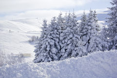 Winter and Snow Royalty Free Stock Image