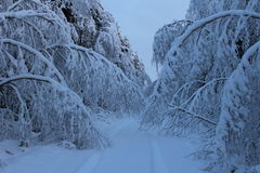 Winter. Snow bend Trees Stock Photography
