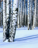 Winter snow birch forest, vertical Royalty Free Stock Photos