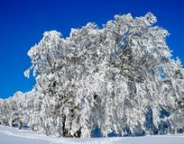 Winter, Snow, Blue, Tree stock image
