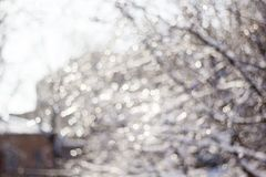 Winter snow blurred background in city park, snowfall in forest, tree branches and bushes covered with snow. Abstract snowflakes in blur stock image