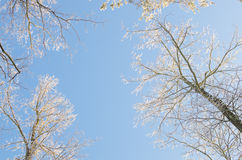 Winter snow branches against blue sky Stock Photography