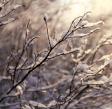 Winter snow on the branches of a tree Royalty Free Stock Photography