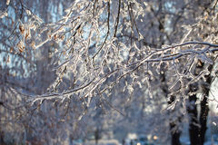 Winter, snow on the branches of a tree, patterns Royalty Free Stock Photos