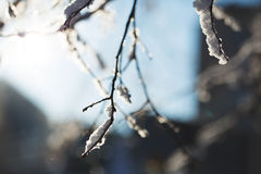 Winter, snow on the branches of a tree, patterns Stock Photo