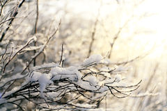 Winter, snow on the branches of a tree, patterns Stock Photos
