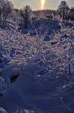 Winter snow branches Royalty Free Stock Images