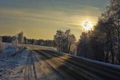 Winter snow branches Royalty Free Stock Photos