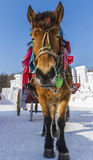 Winter Snow carriage Royalty Free Stock Image