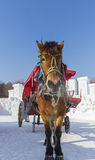 Winter Snow carriage Royalty Free Stock Photos