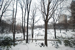 Winter Snow in Central Park, Manhattan. New York City Royalty Free Stock Image