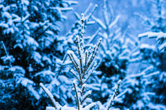 Winter Snow Christmas Tree 5 Royalty Free Stock Photo