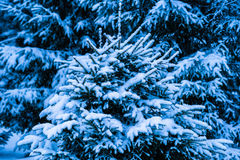 Winter Snow Christmas Tree 8 Royalty Free Stock Image