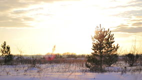 Winter snow, Christmas trees, an idyllic landscape. At sunset stock video