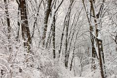 Winter Snow Forest Background Royalty Free Stock Photos