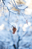 Winter. Snow covered branch with dead leaves Royalty Free Stock Images