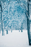 Winter snow covered forest Royalty Free Stock Photography
