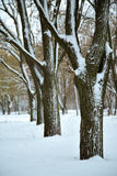 Winter snow covered forest Stock Photos
