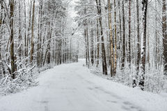 Winter snow-covered forest Stock Photo