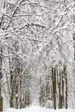 Winter snow-covered forest landscape Stock Photos
