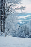 Winter snow-covered forest Stock Images