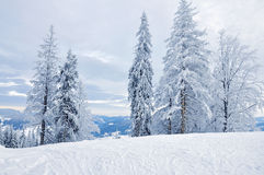 Winter snow-covered forest Stock Photography