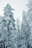 Winter snow-covered forest Royalty Free Stock Photo