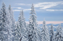 Winter snow-covered forest Stock Photos