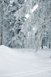 Winter snow-covered forest Royalty Free Stock Images